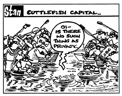 Cuttlefish capital